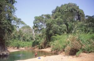JungleRiver2swim