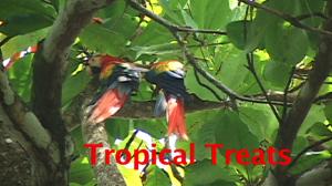 TropicalTreatsMacawsTitle